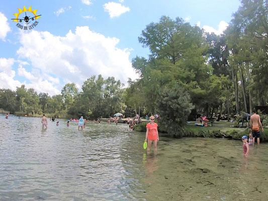Schwimmen im Badebereich des Alexander Springs.