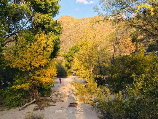 Wandern und spazieren im Sabino Canyon.