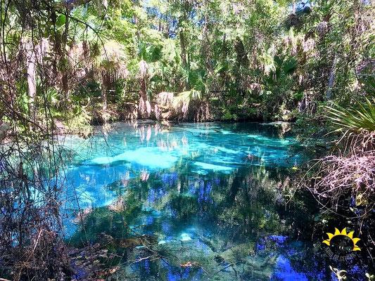 Kristallklares Wasser des Fern Hammock Spring.