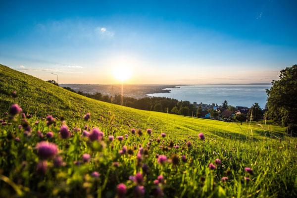 Sonnenuntergang am schweizerischen Bodenseeufer.