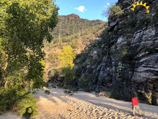 Am Sabino Creek entlang im Sabino Canyon in Tucson.