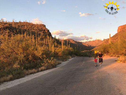 Dem Sonnenuntergang entgegen wandern im Sabino Canyon.