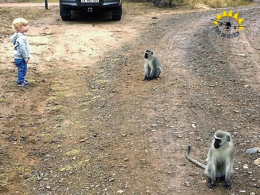 Affen kreuzen den Weg beim Mpila Camp.