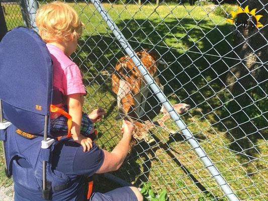 St. Gallen: Unterwegs im Tierpark mit der Minimeis.