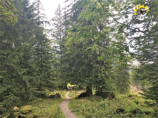 Schattiger Weg zwischen den Bäumen.