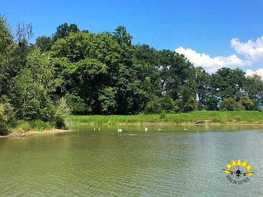 Ein Naturidyll am alten Rhein.