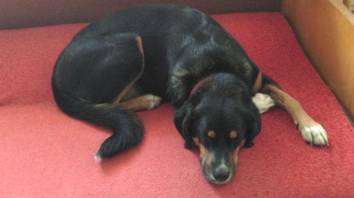Luna auf der alten Couch