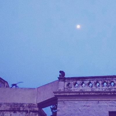 月と猿。聖地ティルバンナーマライのラマナ・アシュラムの夕暮れ。