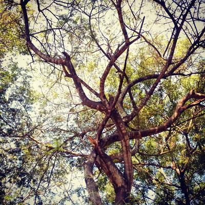 ハンモックに寝転んで、木に語りかける。
