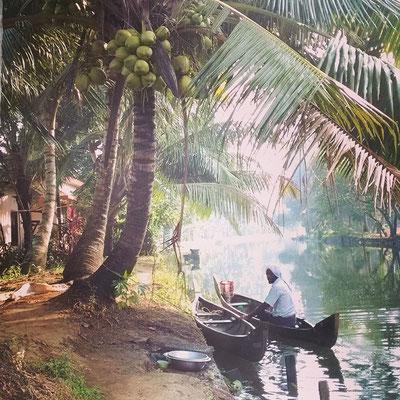 椰子の木、光そそぐ水辺、天国のような風景。
