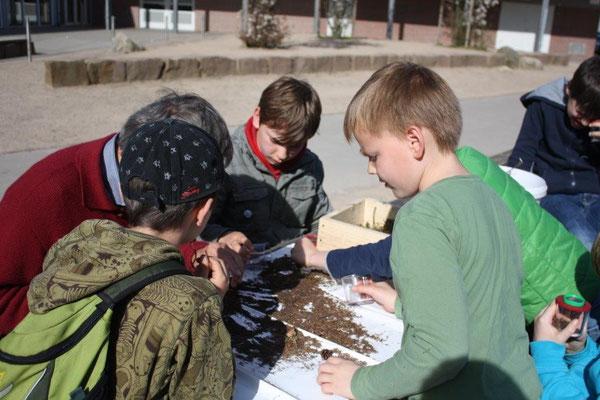 Die NAJUs untersuchen den Boden der Waldschule mit ihren Becherlupen