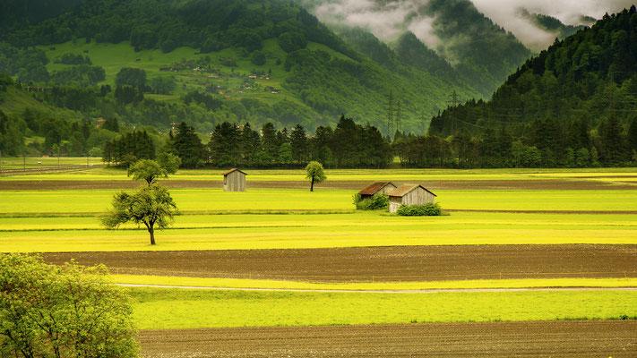 Grüne Wiese Schweiz