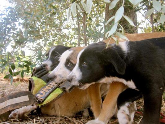 Foto: Ramona Tarras, Tierschutz Apulien