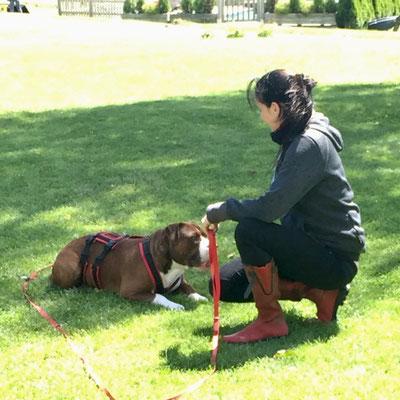 Hundetrainer Ausbildung Basisfachausbildung
