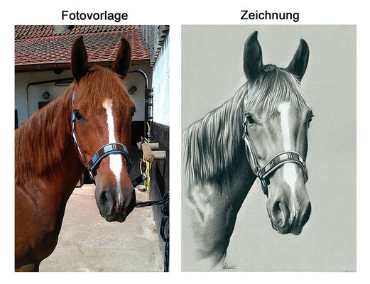Zeichnung eines Pferdes mit Kohle (Vorlage & Zeichnung)