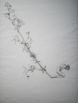 Fleurs séchées, crayon, calque sur papier. 2018.