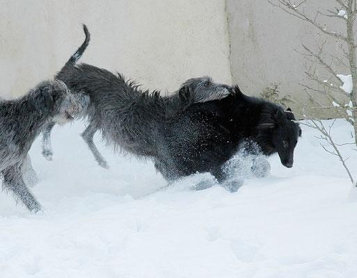 deerapage sur la neige / french pun