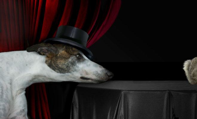 """Bel Ami (clin d'œil aux greyhoundophiles en référence au tableau de Landseer """"Eos, A Favorite Greyhound…""""(visuels XAO, Fotolia).."""