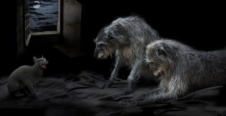 La trêve des deerhounds (visuels XAO).