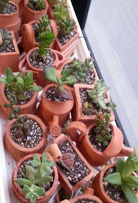 イメージ画像こちらは多肉植物です。