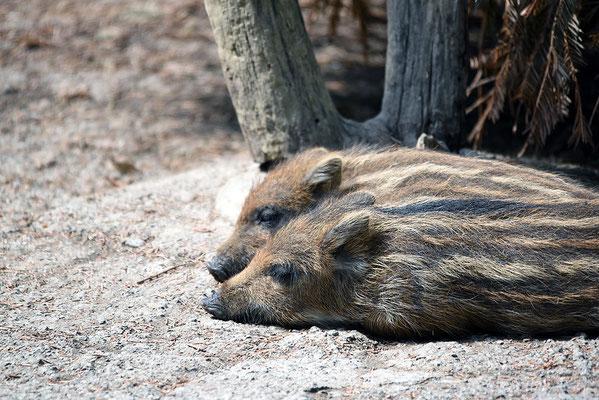 Nr. 6314 / 2015 / Tierpark Langenberg / 6016 x 4016 / JPG-Datei