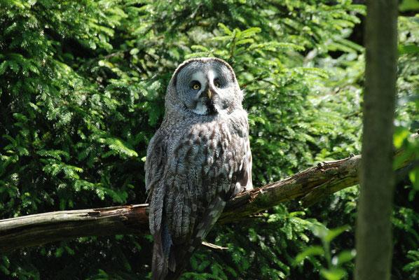 Nr. 6202 / 28.05.2011 / Tierpark Arth-Goldau / 3872 x 2592 / JPG-Datei
