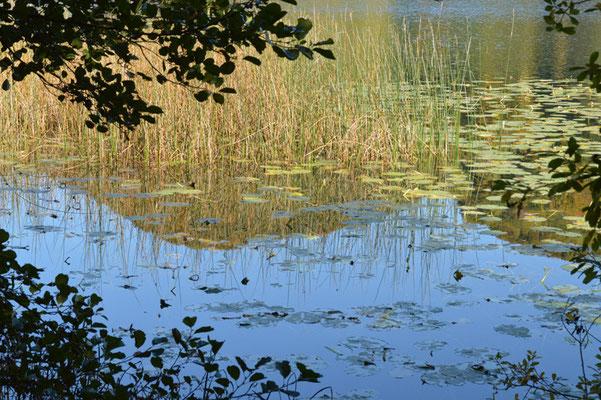 Nr. 252 / 19.10.2013 / Türlersee, Blick Richtung Nord / 6016 x 4000 / JPG Datei