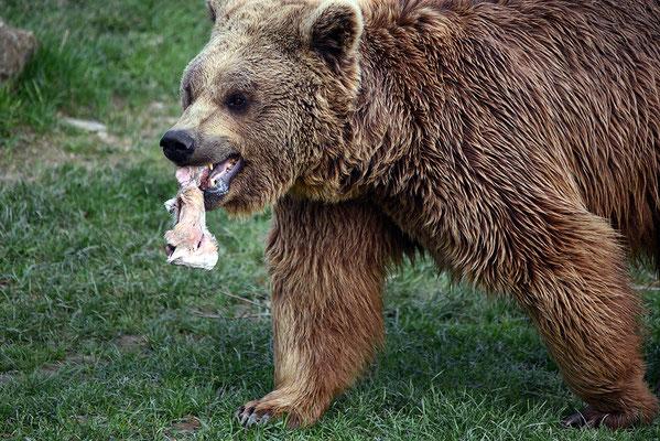 Nr. 6217 / 2016 / Tierpark Arth-Goldau / 6016 x 4016 / JPG-Datei