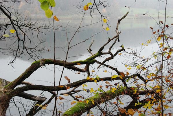 Nr. 240 / 13.11.2011 / Türlersee, Blick Richtung Nord / 3872 x 2592 / JPG Datei