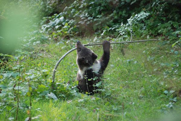 Nr. 6300 / 29.07.2009 / Tierpark Langenberg / 3872 x 2592 / JPG-Datei