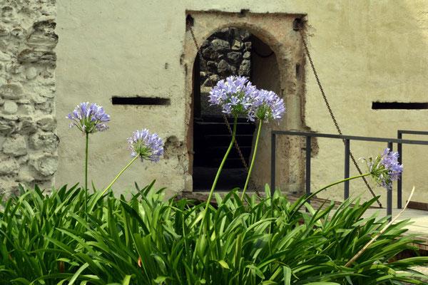Nr. 2564 / 09.08.2014 / Schloss Hallwyl, Seengen / 6000 x 4000 / JPG-Datei