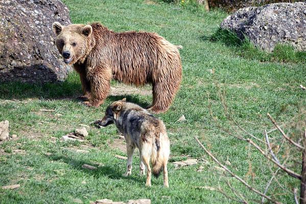 Nr. 6216 / 2016 / Tierpark Arth-Goldau / 6016 x 4016 / JPG-Datei