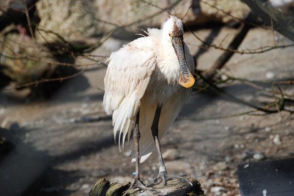 Nr. 6033 / 27.02.2012 / Zoo Zürich / 3872 x 2592 / JPG-Datei