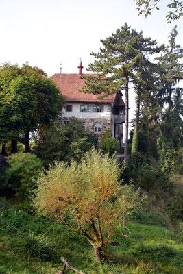 Nr. 2607 / 05.10.2014 / Schloss Wellenberg, Felben Wellhausen / 6000 x 4000 / JPG-Datei