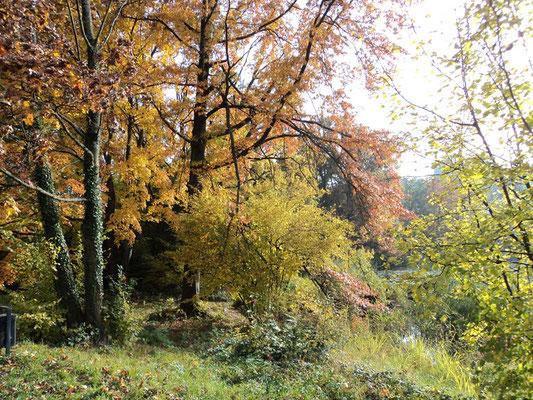 Nr. 271 / 30.10.2011 / Halbinsel Au, Wädenswil, Ausee, Blick Richtung Süden - Ost / 4000 x 3000 / JPG Datei