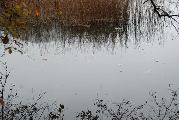 Nr. 242/ 13.11.2011 / Türlersee, Blick Richtung Nord / 3872 x 2592 / JPG Datei