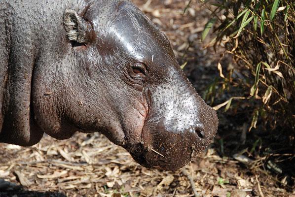 Nr. 6056 / 24.03.2012 / Basler Zoo / 3872 x 2592 / JPG-Datei