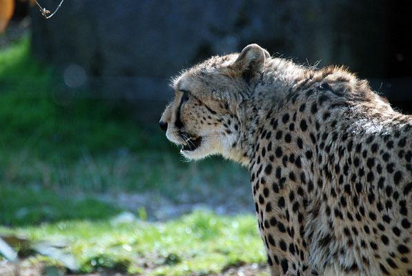 Nr. 6069 / 24.03.2012 / Basler Zoo / 3872 x 2592 / JPG-Datei