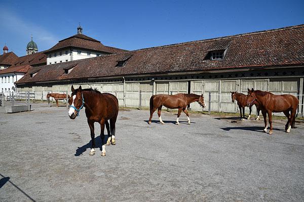 Nr. 3058 / 2016 / Kloster Einsiedeln / 6000 x 4000 / JPG-Datei