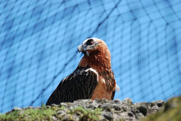 Nr. 6200 / 28.05.2011 / Tierpark Arth-Goldau / 3872 x 2592 / JPG-Datei