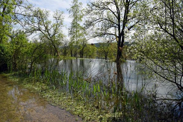 Nr. 5120 / Woche 20 / Hochwasser am Greifensee, Fällanden