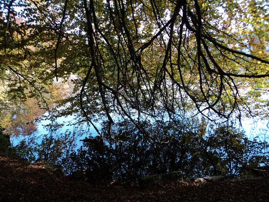 Nr. 264 / 30.10.2011 / Halbinsel Au, Wädenswil, Ausee, Blick Richtung Süden - West / 4000 x 3000 / JPG Datei