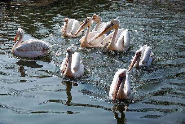 Nr. 6065 / 24.03.2012 / Basler Zoo / 3872 x 2592 / JPG-Datei
