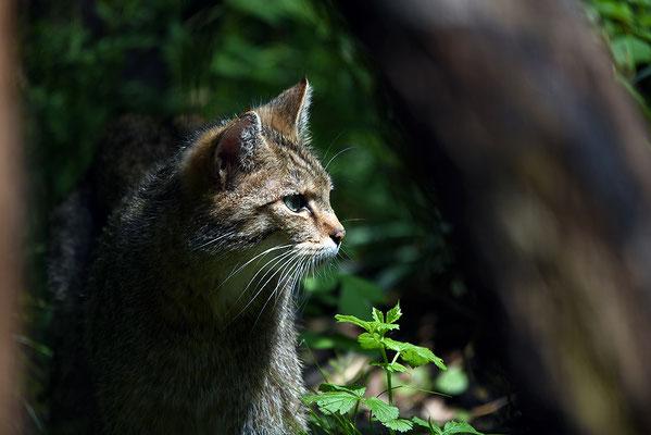 Nr. 6320 / 2015 / Tierpark Langenberg / 6016 x 4016 / JPG-Datei