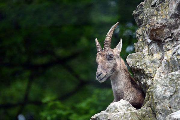 Nr. 6321 / 2015 / Tierpark Langenberg / 6016 x 4016 / JPG-Datei