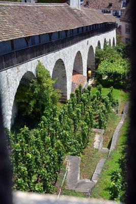 Nr. 2632 / 2014 / Burg, Munot / 6000 x 4000 / JPG-Datei / NEF Datei