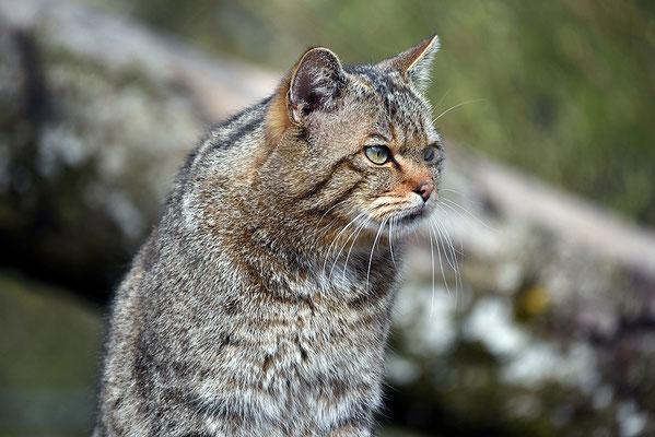 Nr. 6218 / 2016 / Tierpark Arth-Goldau / 6016 x 4016 / JPG-Datei