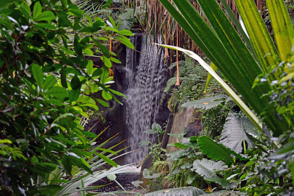 5051 / Zoo Zürich, Wasserfall in Masoalahalle / 6016 x 4000 / JPG-Datei