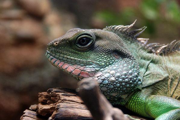 Nr. 6064 / 24.03.2012 / Basler Zoo / 3872 x 2592 / JPG-Datei