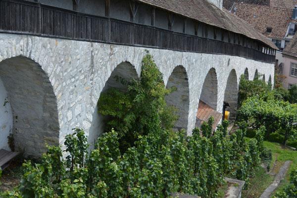 Nr. 2636 / 2014 / Burg, Munot / 6000 x 4000 / JPG-Datei / NEF Datei